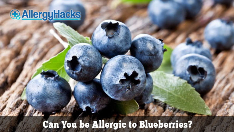 blueberry allergy