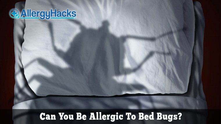 bed-bug-allergy